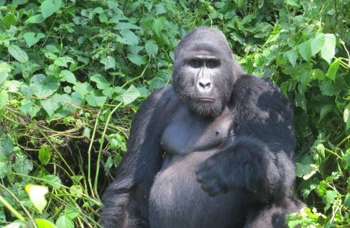 Rwanada Primates Safari and Kayak Trip