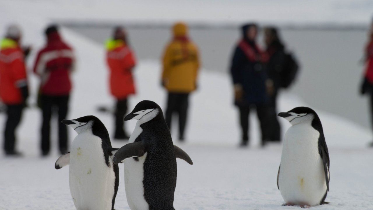people and penguins in antarctica