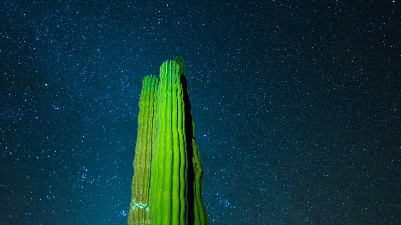 cactus in front of stary sky in baja