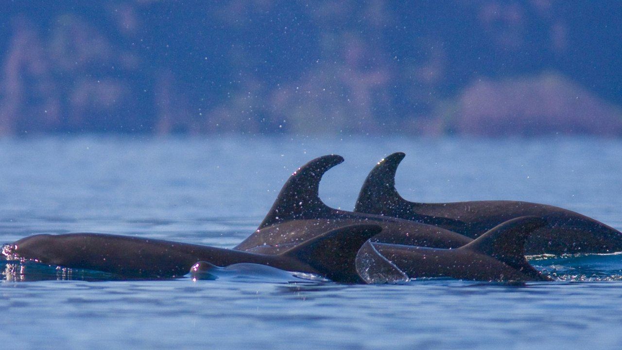 dolphins in sea of cortez, mexico