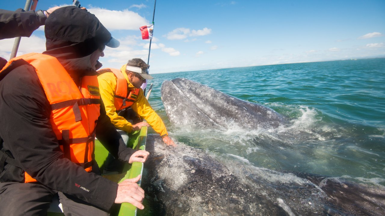 whale watching tour baja
