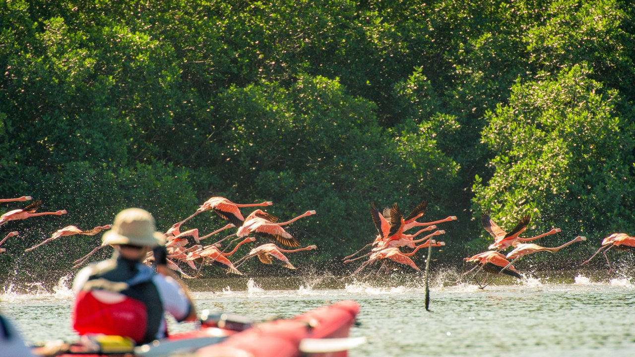 sea kayak with flamingos in cuba