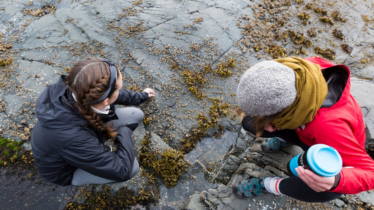 two women looking at intertidal zone