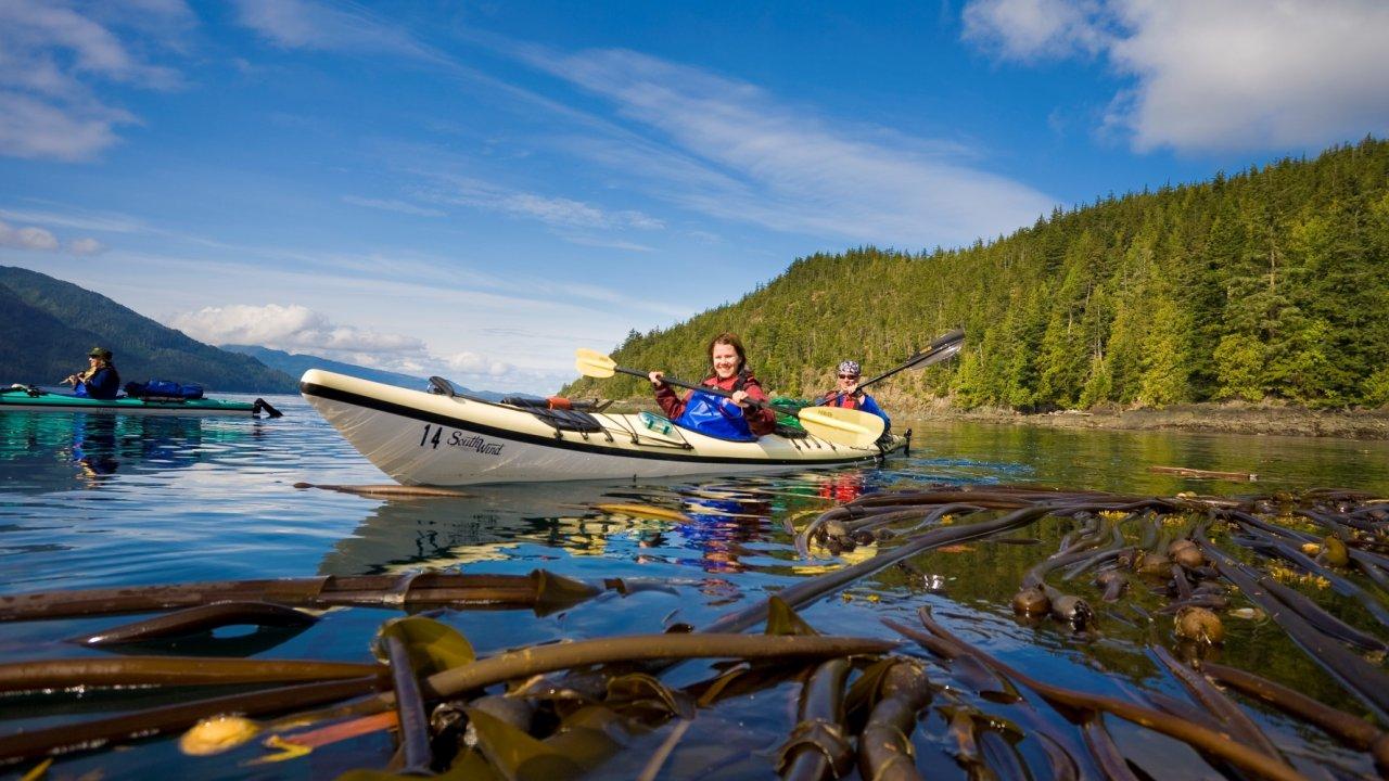 sea kayak blackfish sound