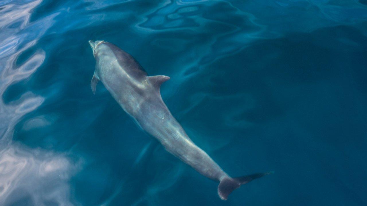 dolphin in baja