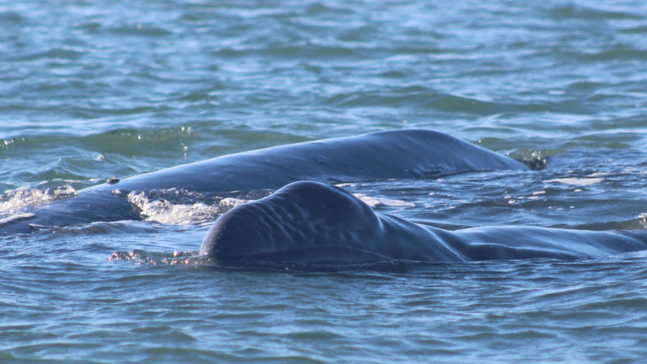mom and baby gray whale baja