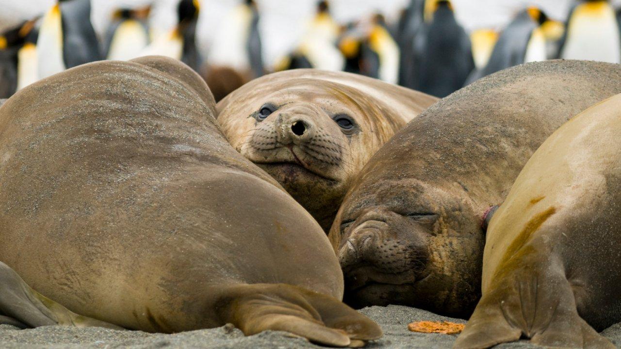 Marine Mamals Antarctica