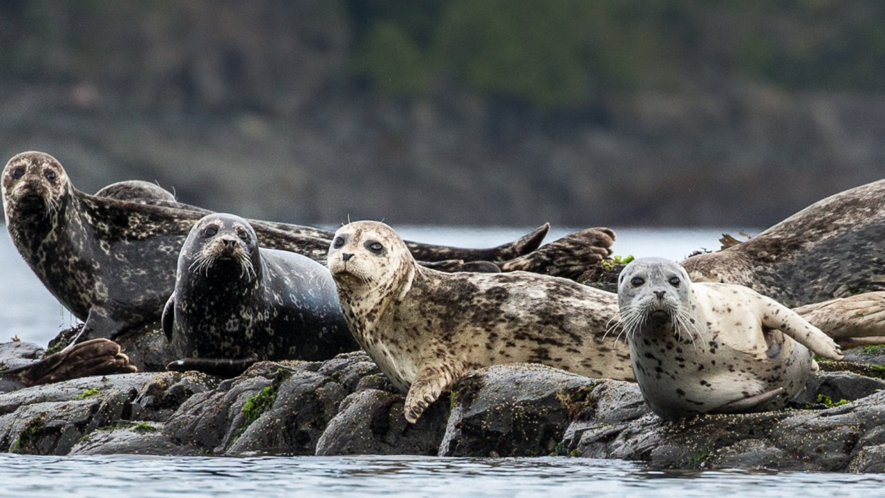 group of seals sitting on rocks