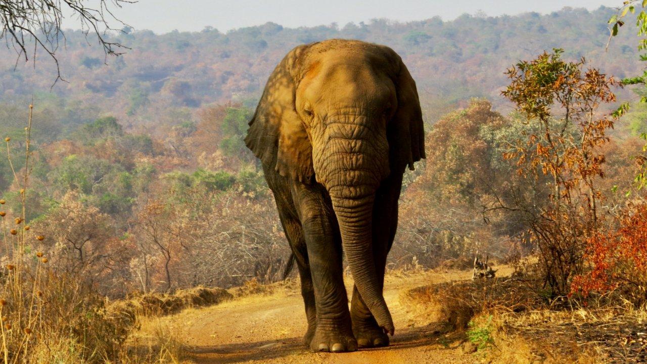 elephant in Rwanda
