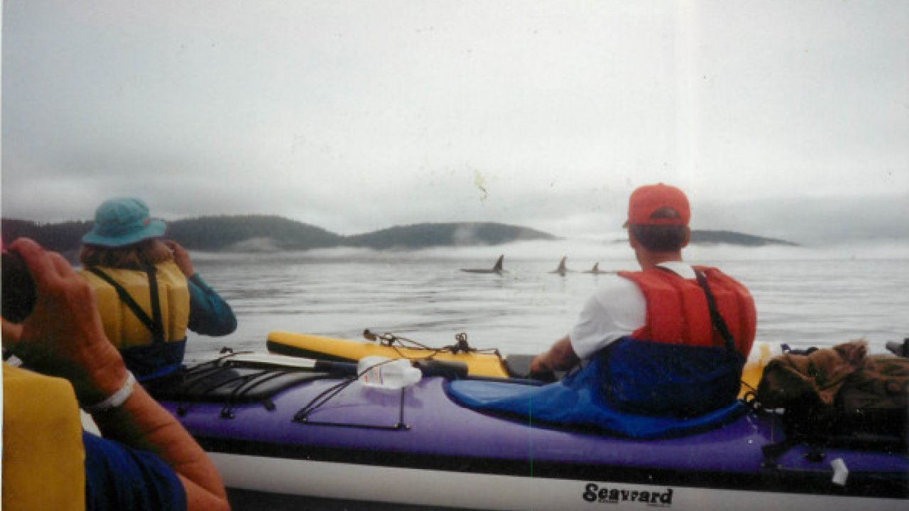 kayaking and orcas