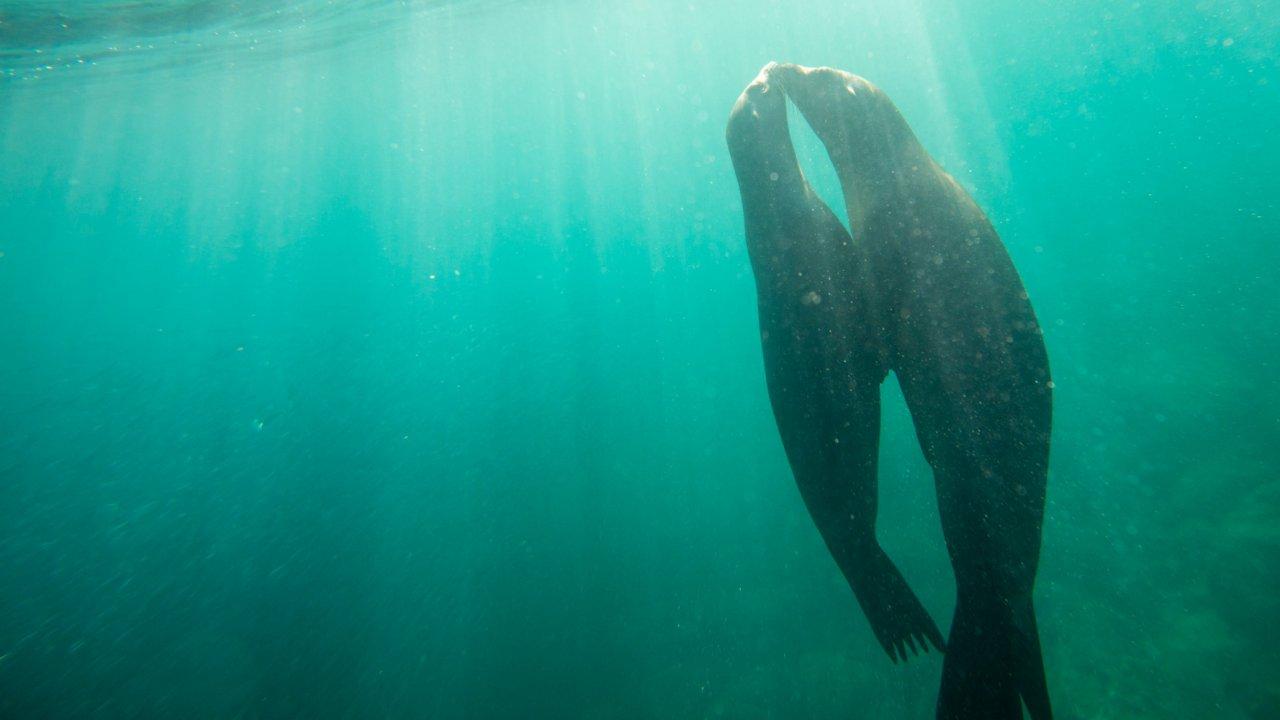 sea lions baja