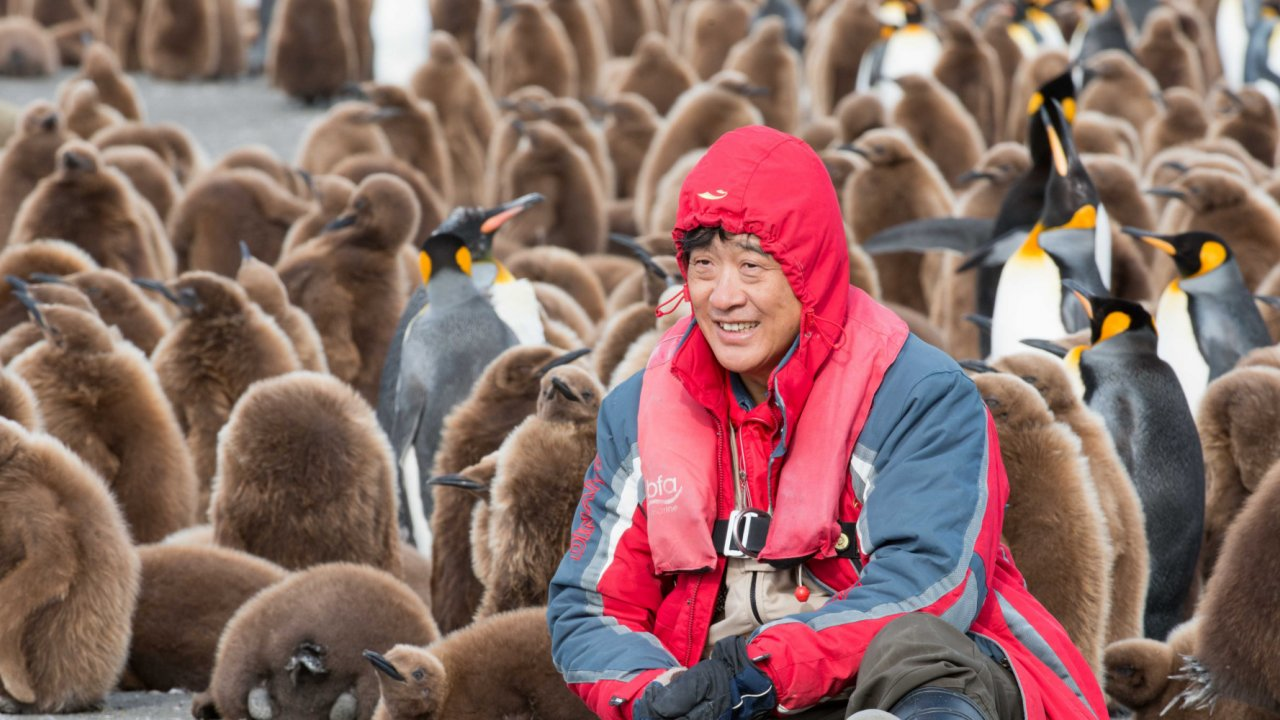 man surrounded by penguins