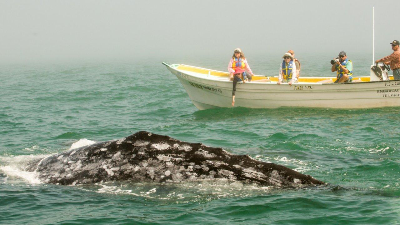 whale watchers in baja