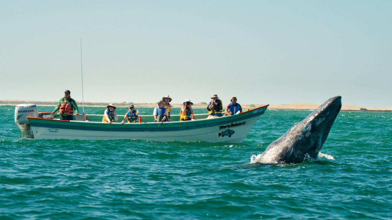 people gray whale watching baja