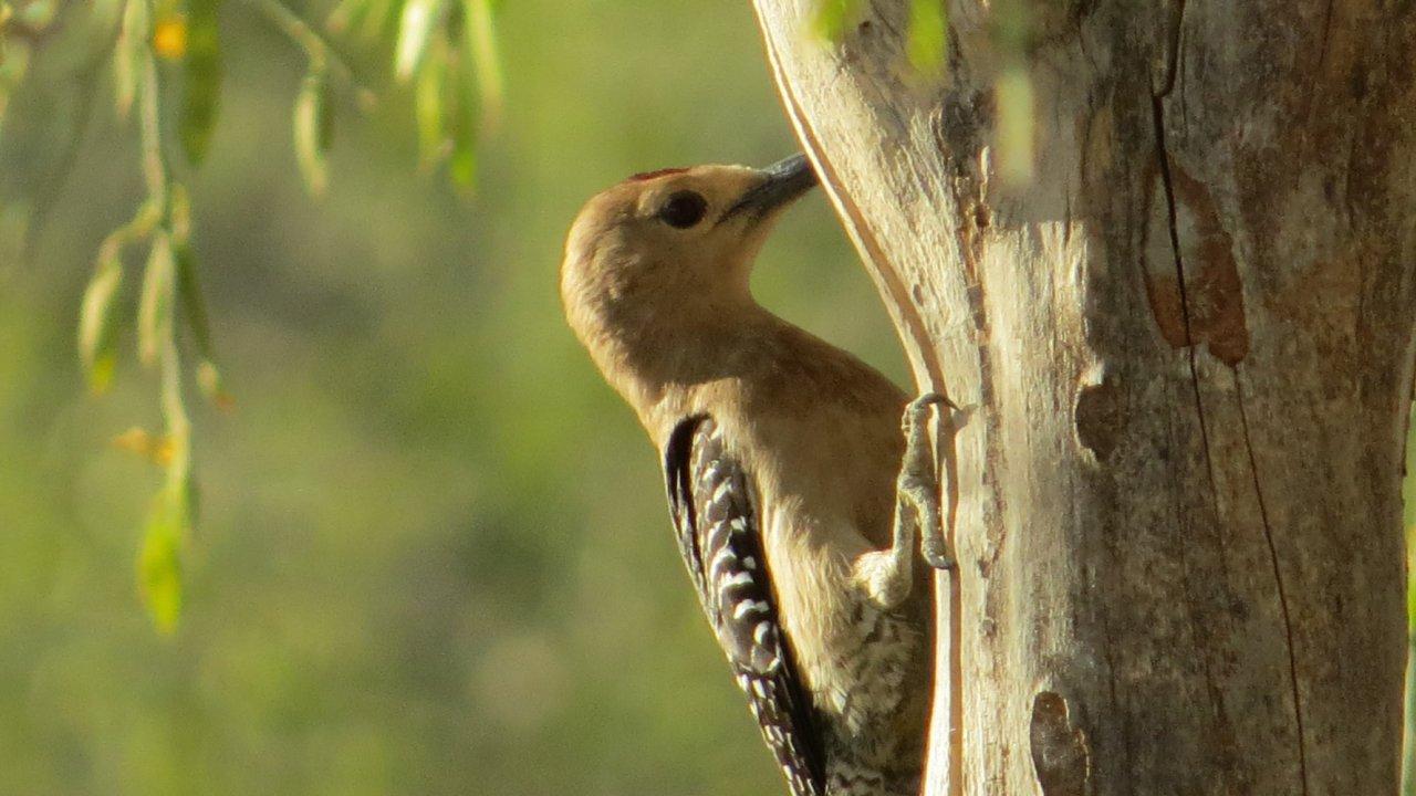 bird in Baja California Sur