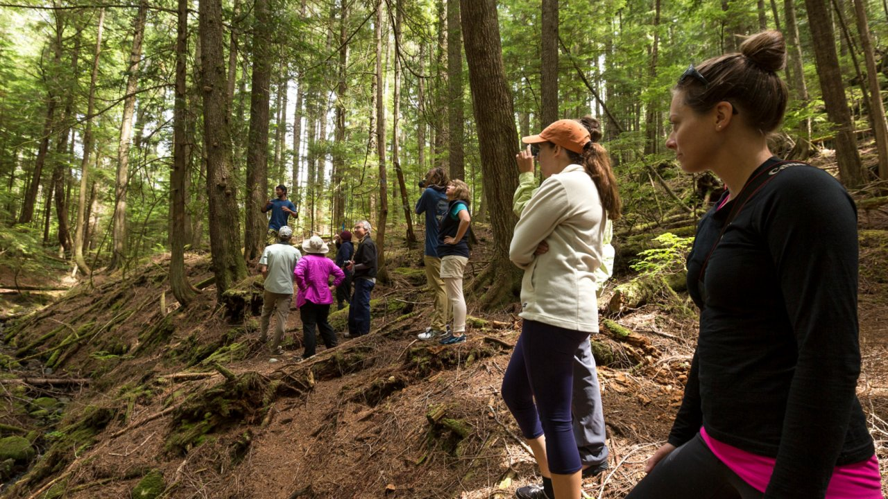 people in cedar forest in british columbia