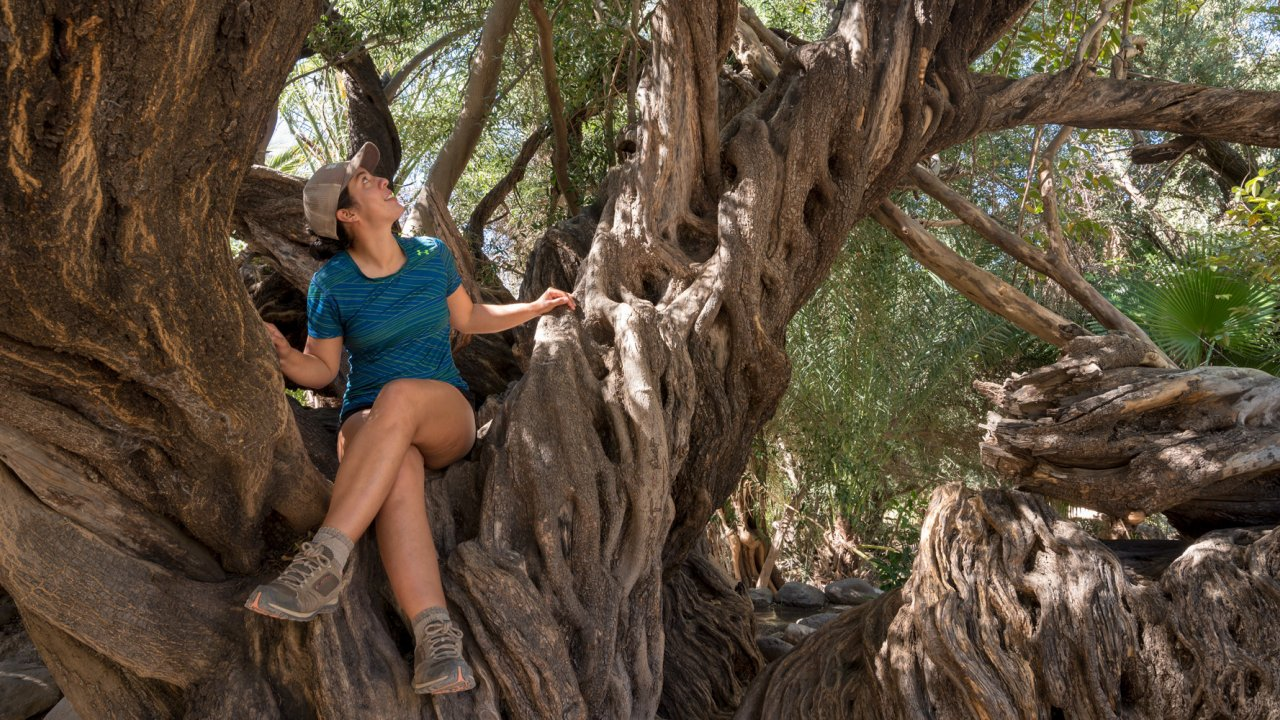 girl in old tree in baja, mexico