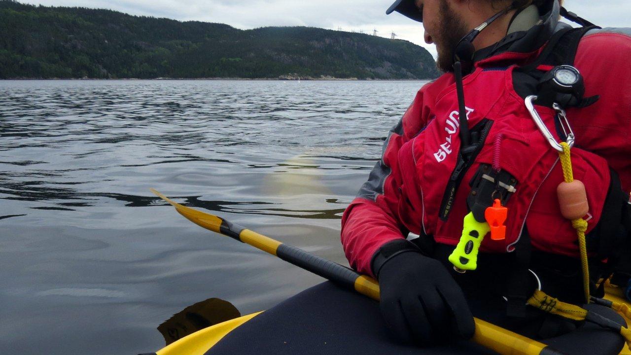sea kayaker looking at a beluga whale