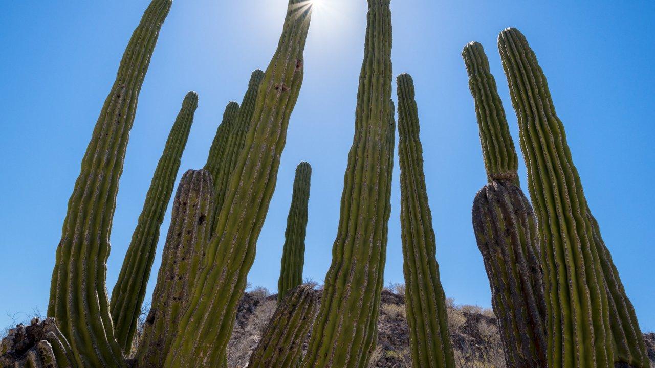 cactus in Baja, mexico