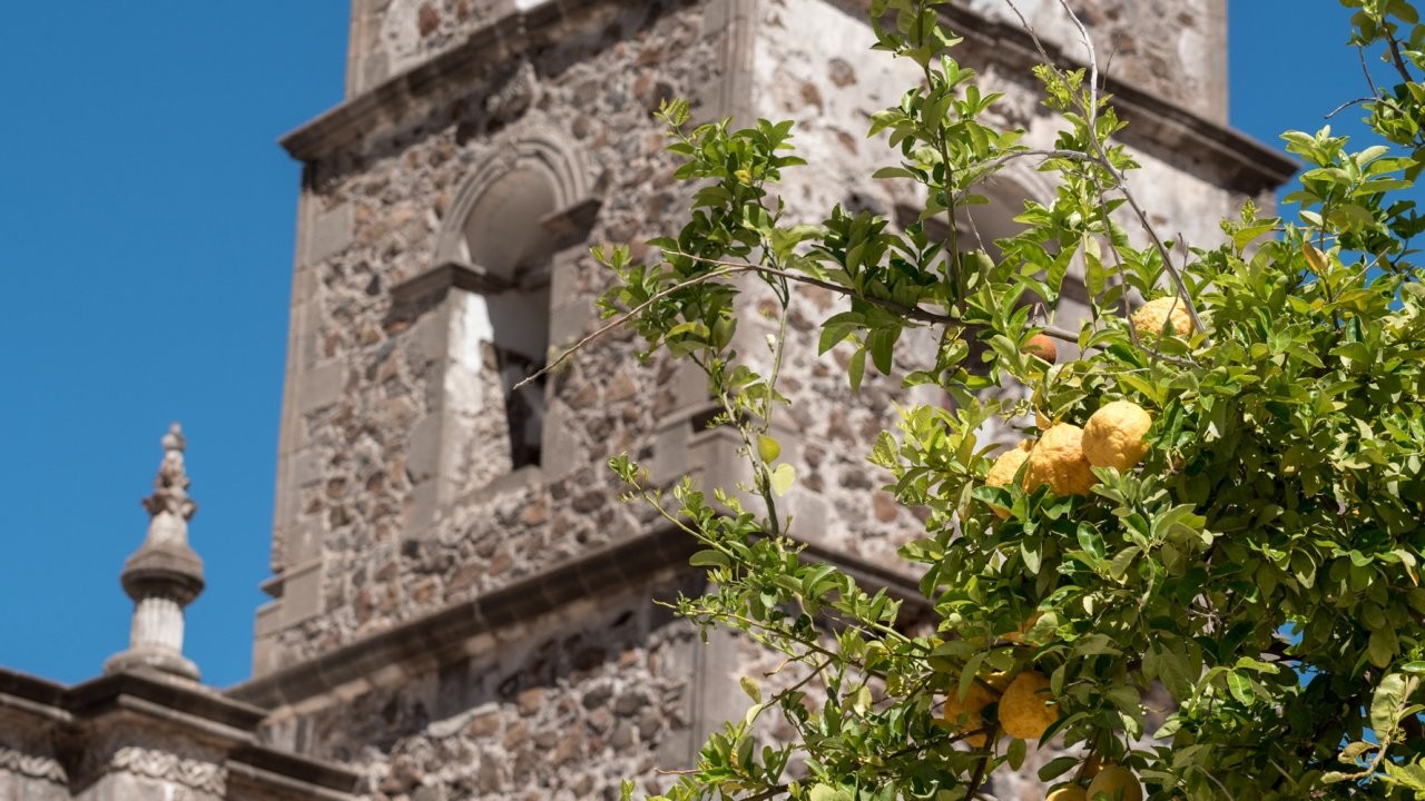lemon tree in front of an old mission in baja