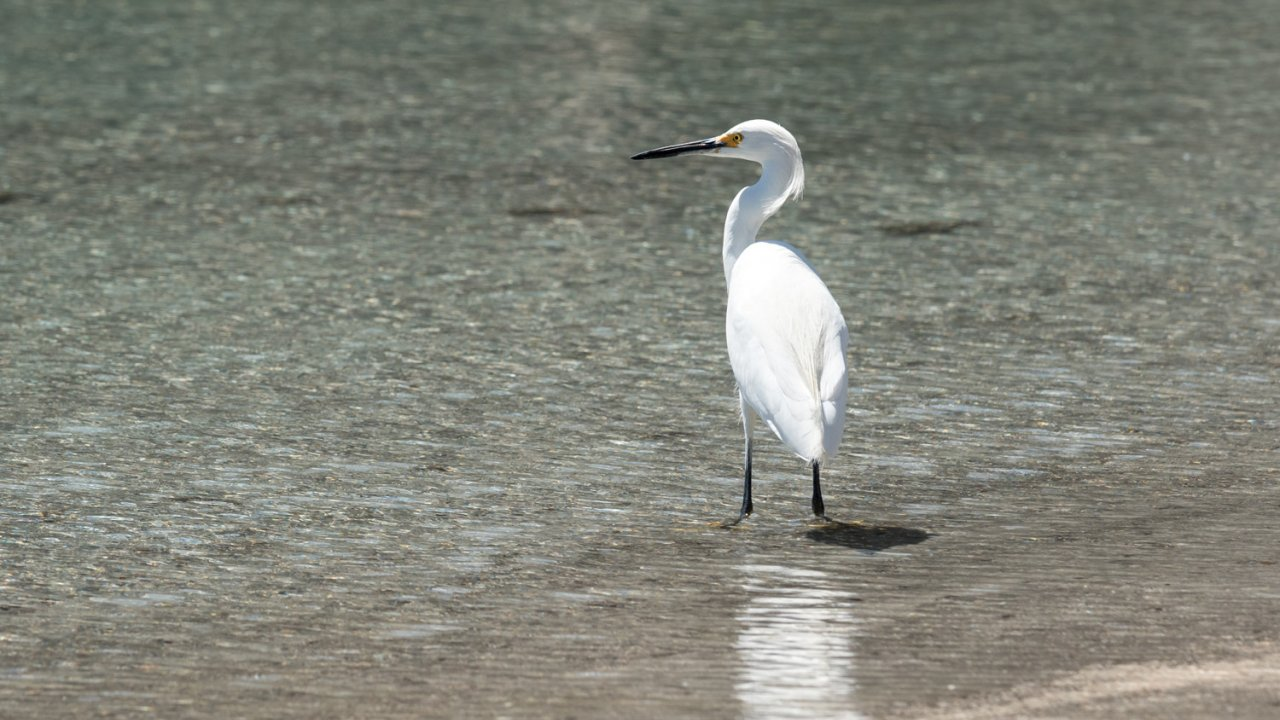 white bird in Baja