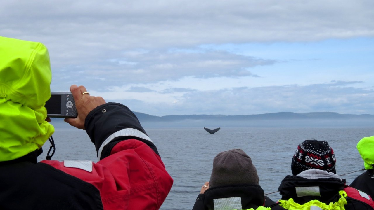 whale watching in quebec, canada