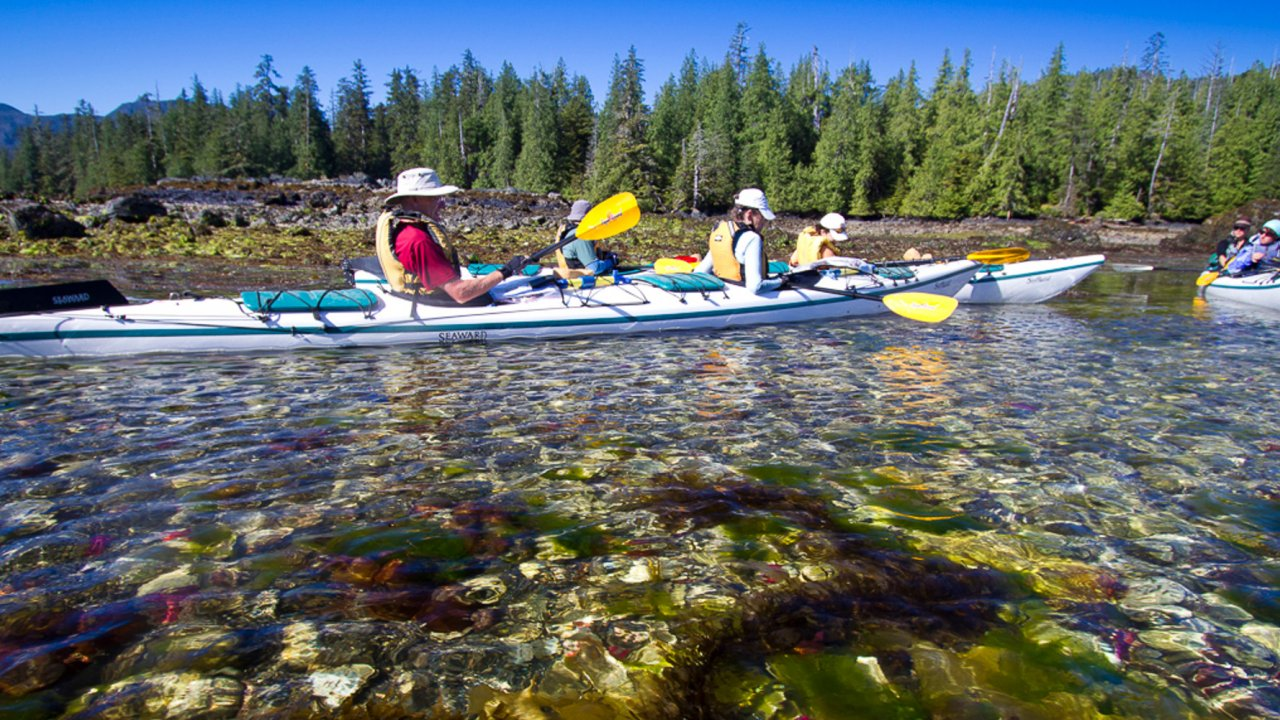 kayakers looking for marine life