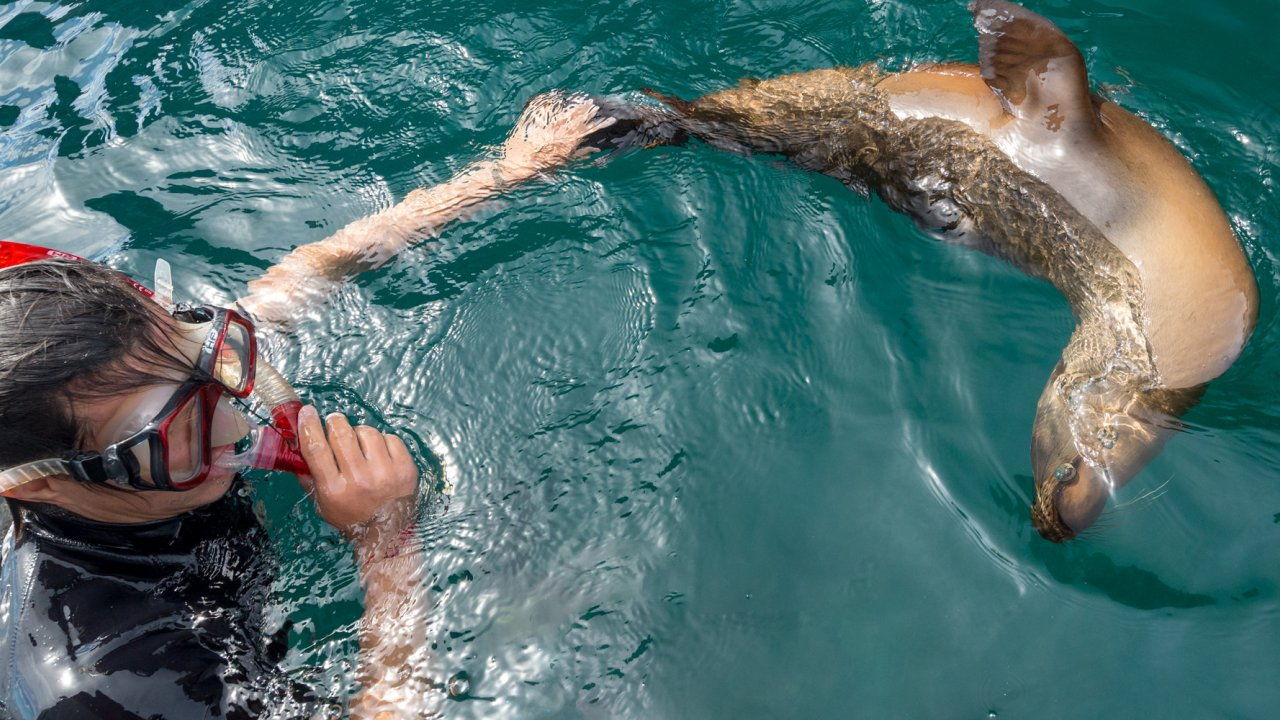 person snorkeling with sea lion in Baja
