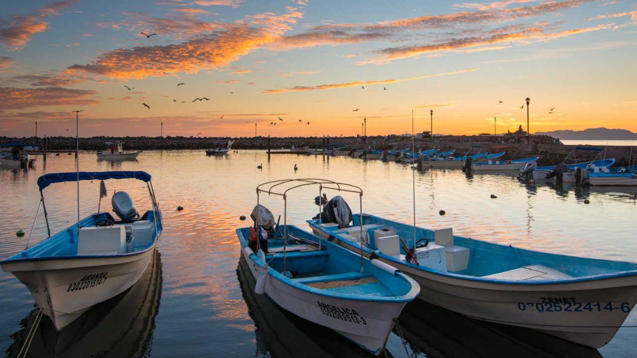 whale watching boats resting in baja lagoon