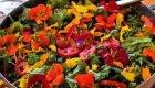organic beat salad baja