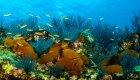 snorkeling in cabo plumo