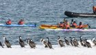 kayakers and penguins in antarctica