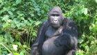 Rwanda Gorilla and Kayak Tour