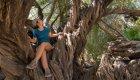 old tree in san javier baja