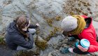 women searching an shallow intertidal zone