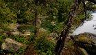 coastal forest british columbia