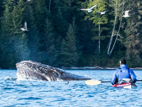 sea kayaking and whale watching tours
