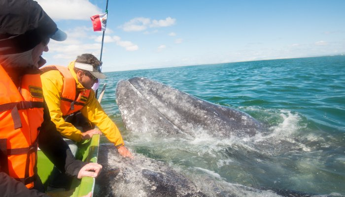San Ignacio Whale Watching Baja